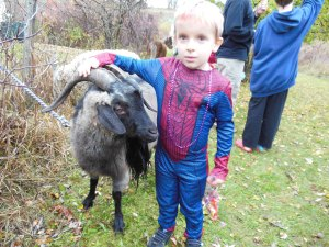 Kids of all ages enjoyed our petting zoo and costume contest